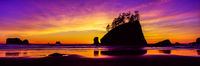 Painting the Beach,Olympic National Park, Washington.Scattered,Rise,Tower,Sand,Sky,Costline