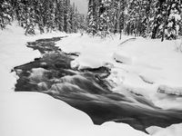 Holding Back Winter, Canada, Horizontal, landscape, winter, Jasper National Park, , BW, B&W, Black, White