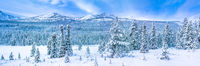 Winter Wonderland,Winter,wonderland,Jasper, park, Canada, panoramic, horizontal,blue