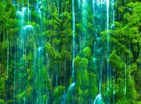 Rivulets in Moss,California,Close-up,Waterfall,horizontal,Rain,Train, Track,