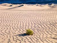Death  Valley Shady Spot,California,Death Valley National Park,Desert,Dune,Dunes,horizontal