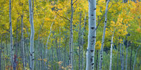 Bending Light,Fall,Aspen, Colorado,Valley,Trees,Light,Ray
