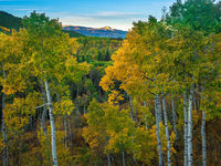 Aspen Grove,Aspen Grove,McClure Pass, Colorado,colors,summer,foliage