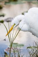 Spear Fishing,Everglades National Park, Florida,Egrat