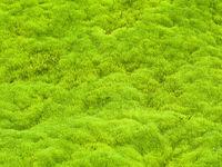 Moss,Iceland,Summer,Moss