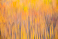 Autumn Abstract,Abstract,Autumn,Massachusetts,Reflection,England,Color,Pond