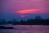 Purple Haze,Alda Bridge,River ,Sandhill Crane,Sunrise,sun,Platte,Nebraska