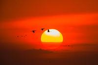 Sandhill Sunset,Alda Bridge,Gallery,Sandhill Crane,Sunrise,sun, Platte River