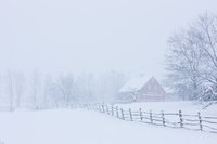 Colder Days,New Hampshire,Apple,Farm,last,Snow,Storm,Spring,Winter