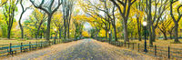 Walking on Gold,Central Park,Cityscape,Elm,Fall,Horizontal,New York City,Trees,Yellow,autumn,panoramic
