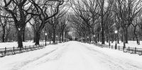 Winter, New York, snow, park, Snow, Winter, BW, B&W, Black, White