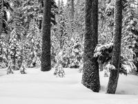 Crater Lake, Black on White, Snow,