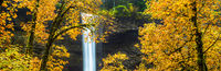 Silver Falls,Silver Falls State Park, Oregon,Water,Shine,Colorful,Autumn,Leaf