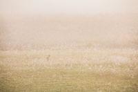 Morning Mist,Morning,Mist,smoke,mountain,park,deer,grass,Light