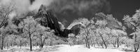 Ice Trees in Zion, Utah, Winter, Zion National Park, horizontal, cottonwood, snow, occasion, BW, B&W, Black, White