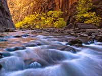 Canyon Yellows,Autumn,River,Zion National Park,horizontal,Autumn,Color,Light