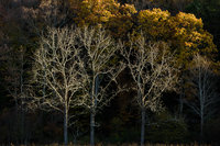 Exposed,Virginia,light,trees,Horizontal