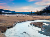 Yellowstone National Park, Wyoming, Madison River Rendezvous, elk