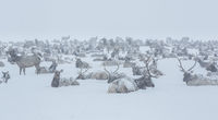 The Big Reunion,National Elk Refuge, Wyoming,cold,Winter,valley, elk