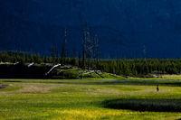 Pinnacle Valley,Elk,Mammal,Spring,Wildlife,Yellowstone National Park, Wyoming,Valley,Pinnacle,River,Spring