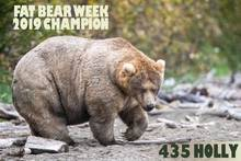 Fat Bear Week! Winner Holly 435- Crowned with Carter's Image!