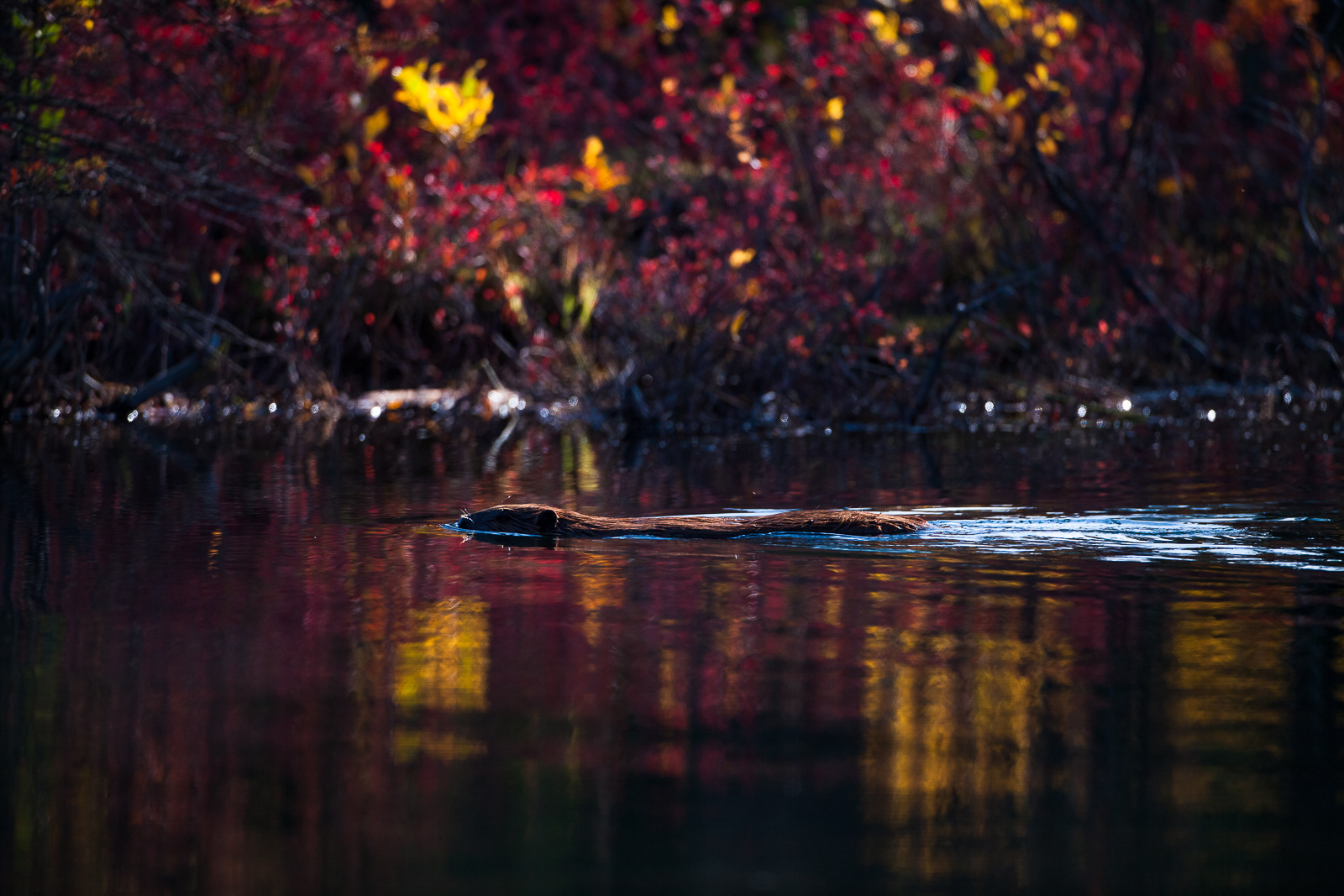 Working In Color,Fall,Landscape,Denali National Park, Alaska,reflection, water,trees, photo