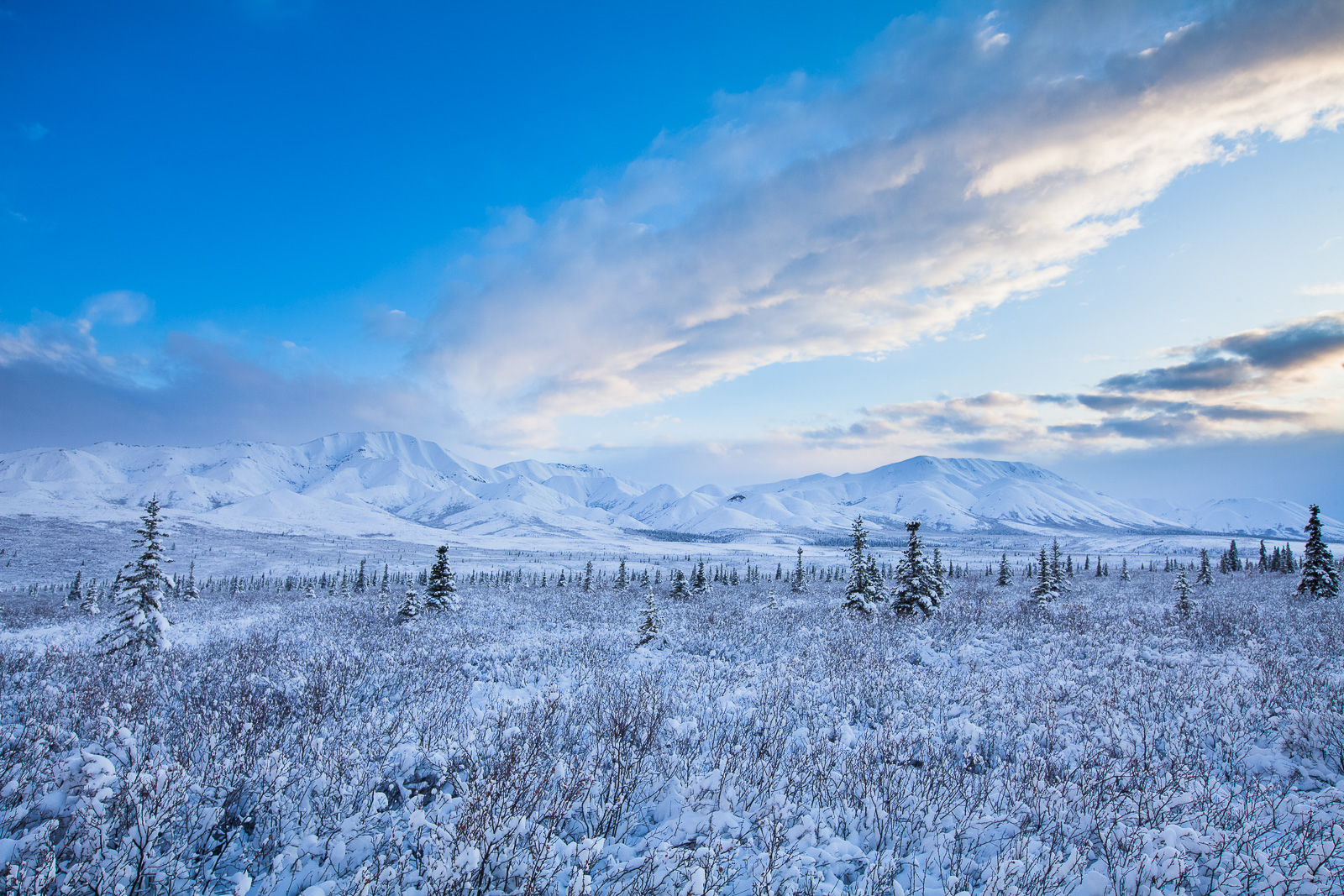 Denali Blues,Fall,Landscape,Snow,Denali National Park, Alaska,Tundra,Snow, photo