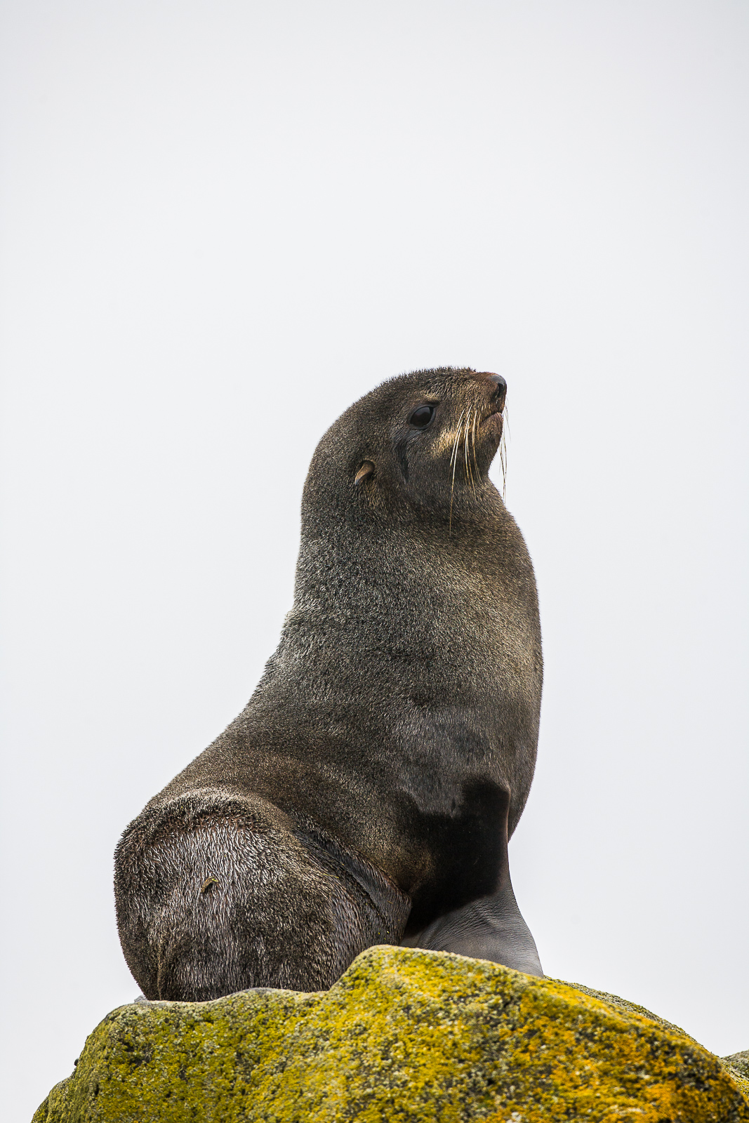 Proud to Be,Alaska,Saint Paul Island,  vertical,Pose,Dignity,Form, photo