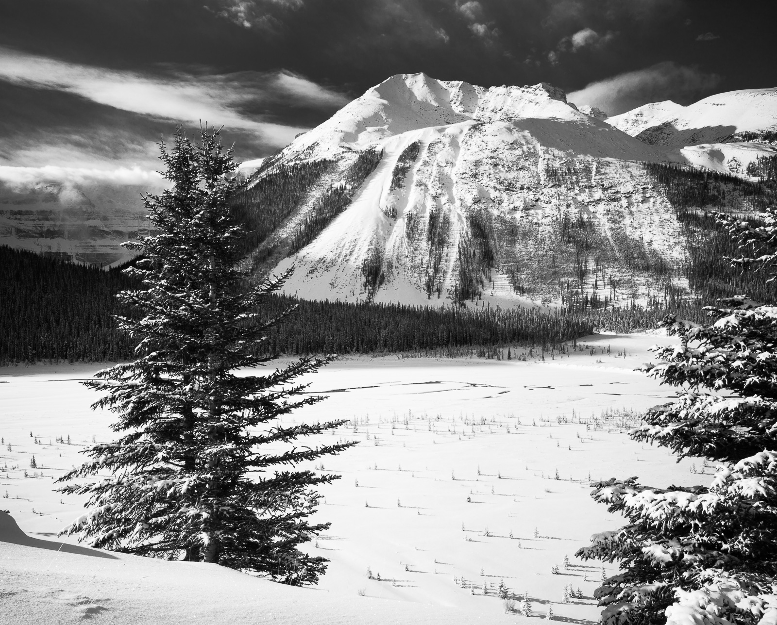 Trailing Trees, Black and White, Canada, Horizontal, Mountain, Mountains, Volcano, landscape, snow, winter, BW, B&W, Black, White, photo