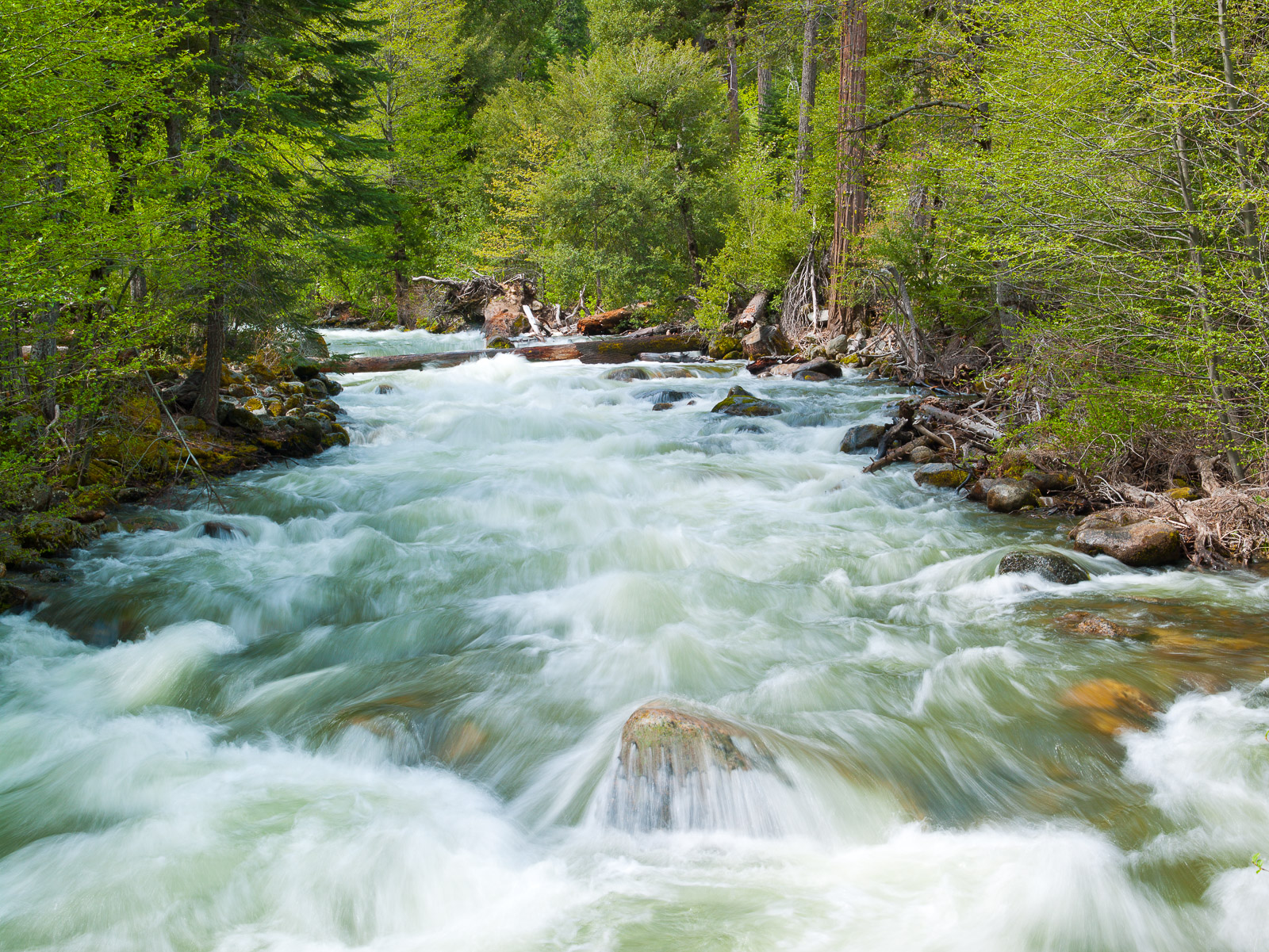 Rushing spring waters of the Merced River within Yosemite National Park.