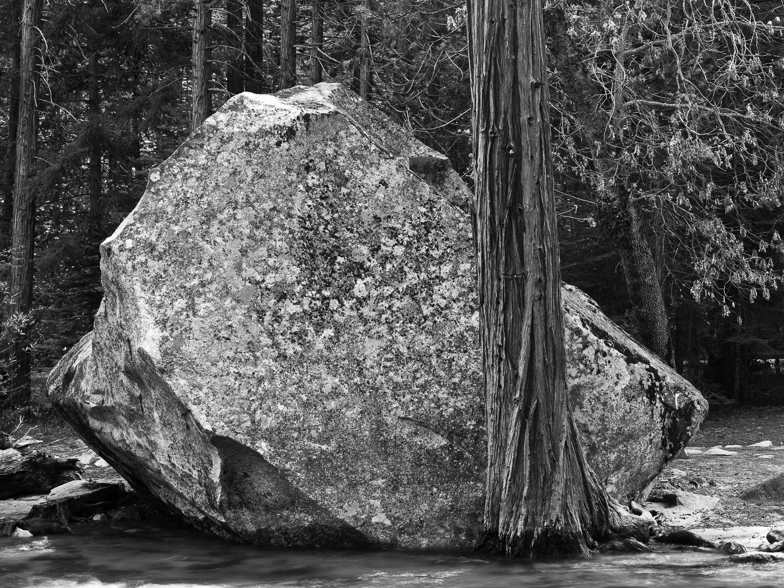 From Strength to Strength, Black and White, California, Yosemite National Park, horizontal, BW, B&W, Black, White, photo