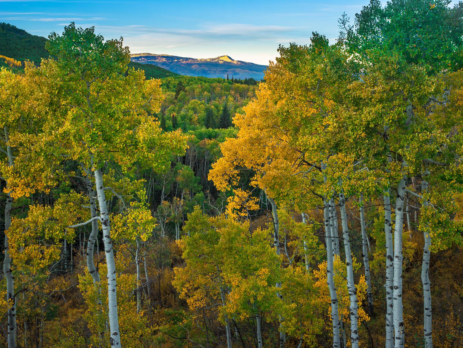 Aspen Grove,Aspen Grove,McClure Pass, Colorado,colors,summer,foliage, photo