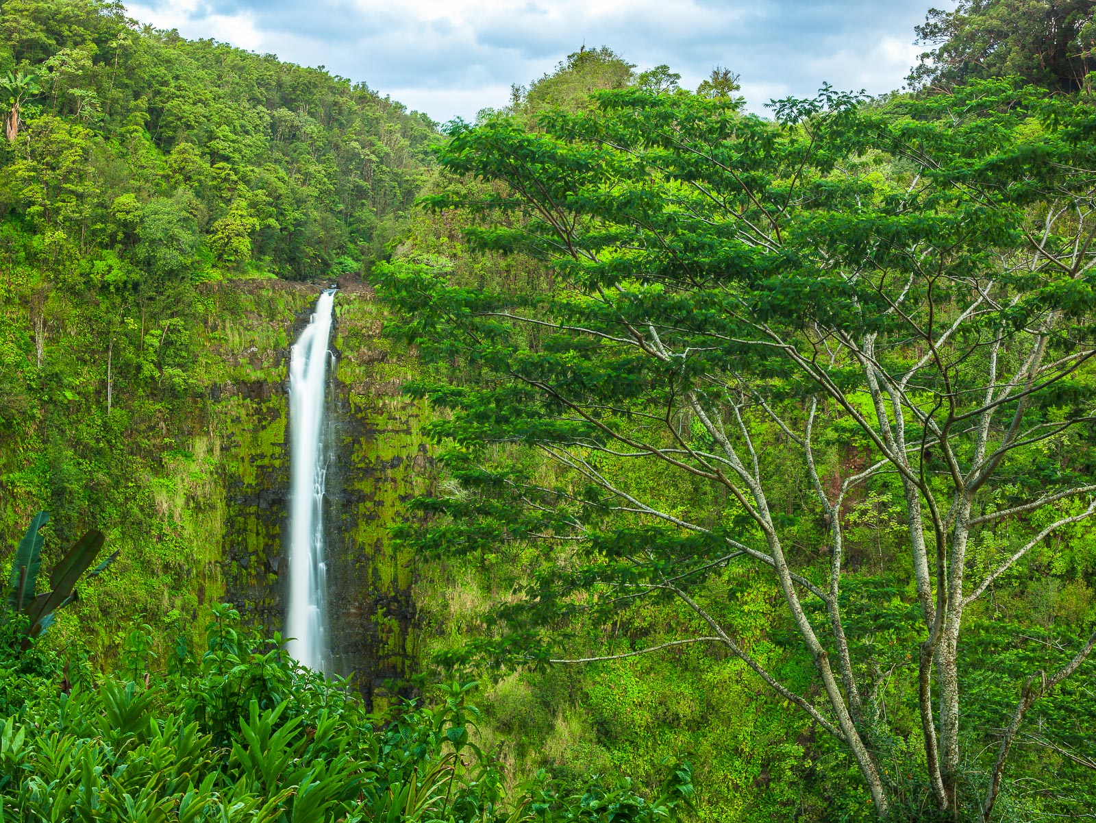Hawaii, Falls,Big Island,waterfall,Lush,Water,Soul, photo