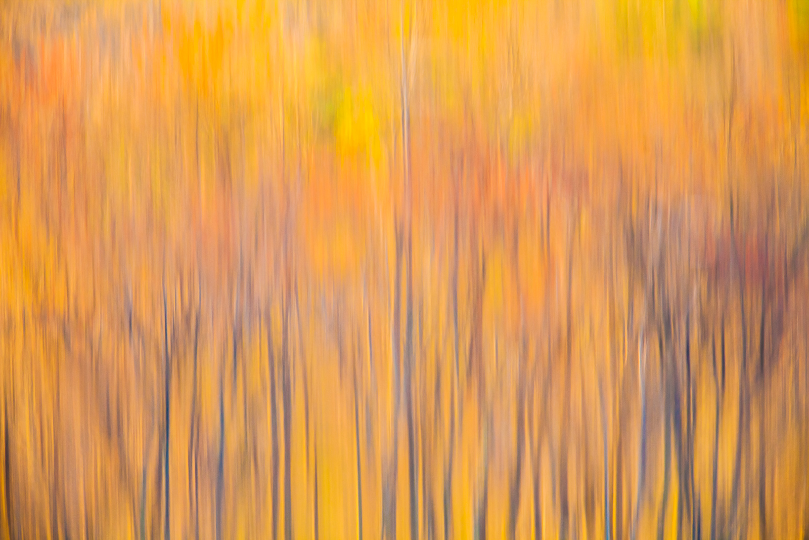 Autumn Abstract,Abstract,Autumn,Massachusetts,Reflection,England,Color,Pond, photo