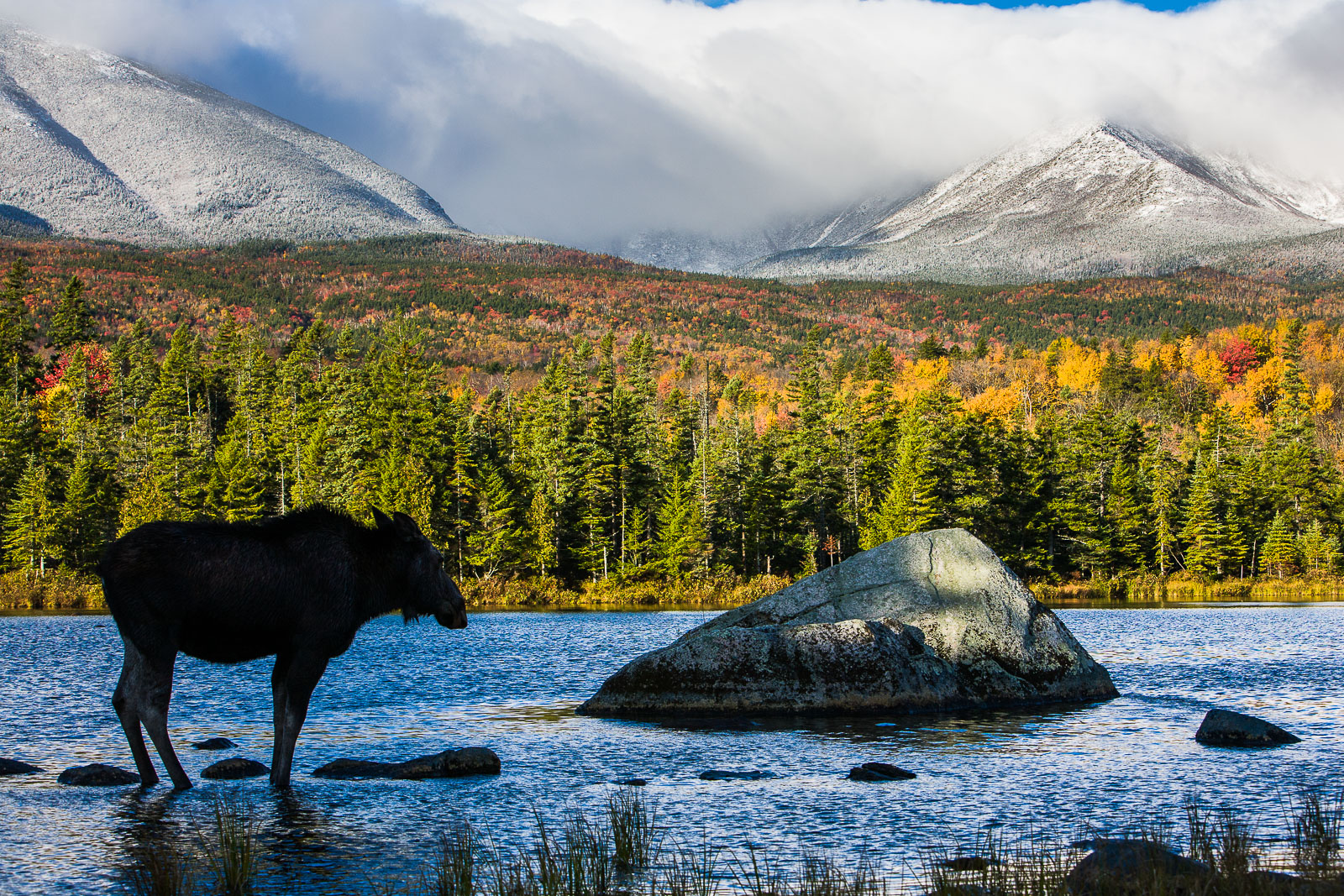 A Zen Moment, Baxter State Park, Maine, white, mountain, water, horizontal, moose, photo