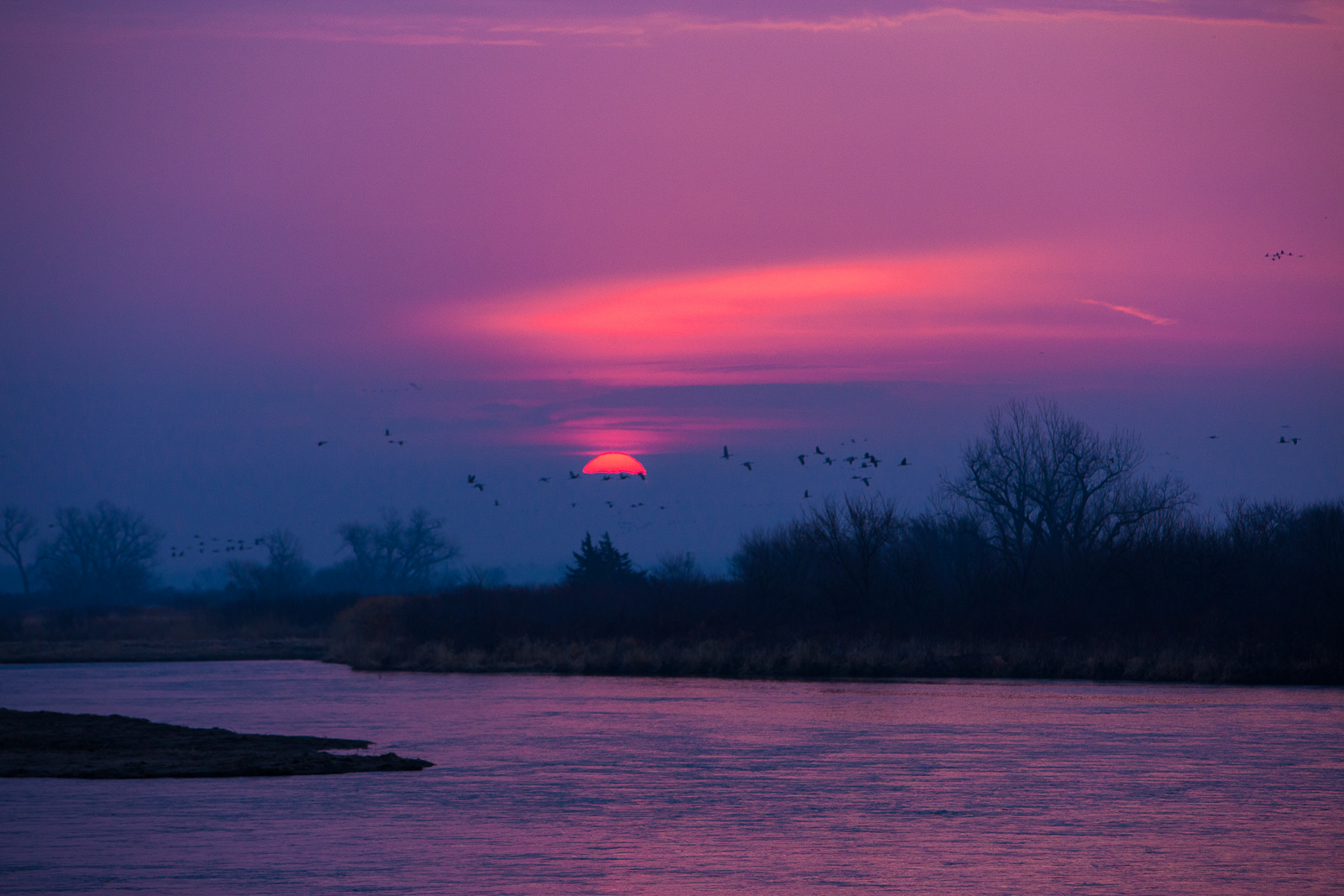 Sandhill cranes come in for a landing as the sun sets along the Platte River, one of the largest migration points in North America...