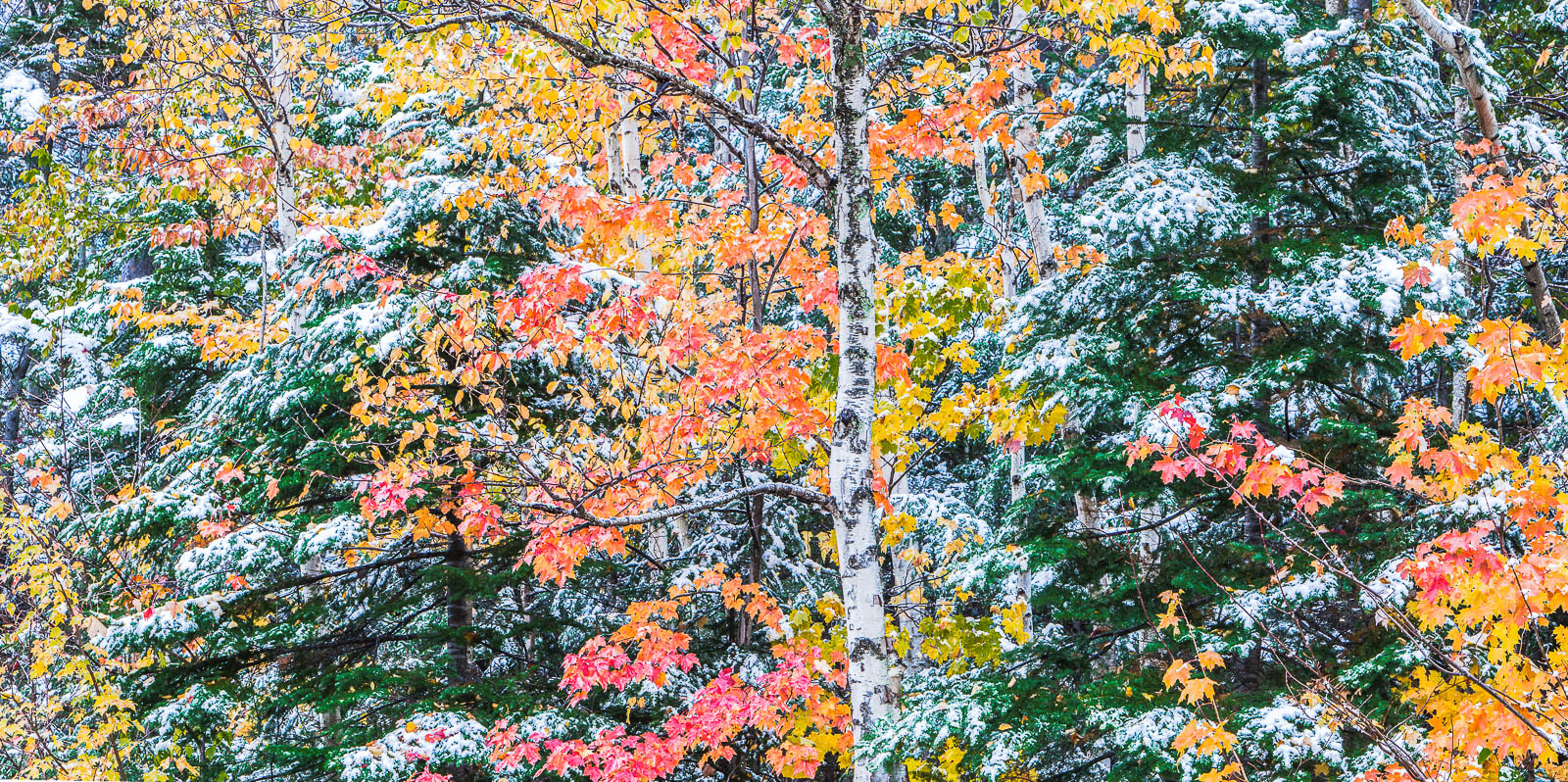 Autumn Highlight,White Mountains, New Hampshire, foliage, Autumn, photo