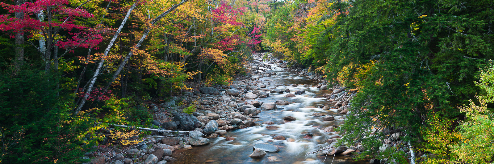 Shades of greens, yellows, and scattered magenta highlight Sawyer River welcoming in the cool autumn days.