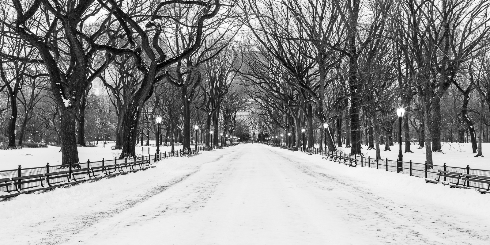 Winter, New York, snow, park, Snow, Winter, BW, B&W, Black, White, photo