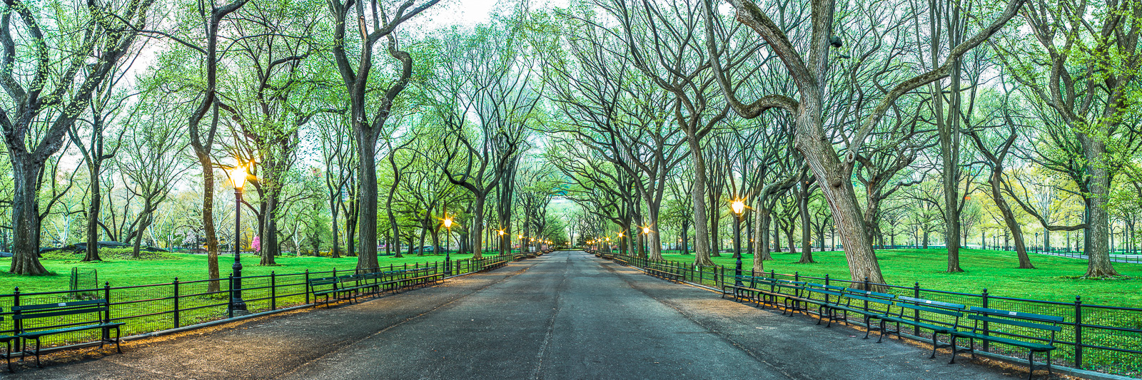 Spring,Central Park,Cityscape,Elm,Green,Horizontal,New York City,Spring,Trees,panoramic, photo