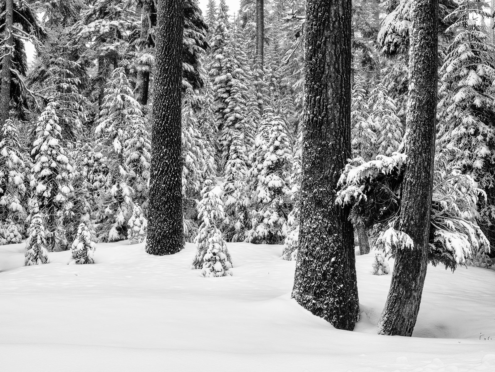 Crater Lake, Black on White, Snow, , photo