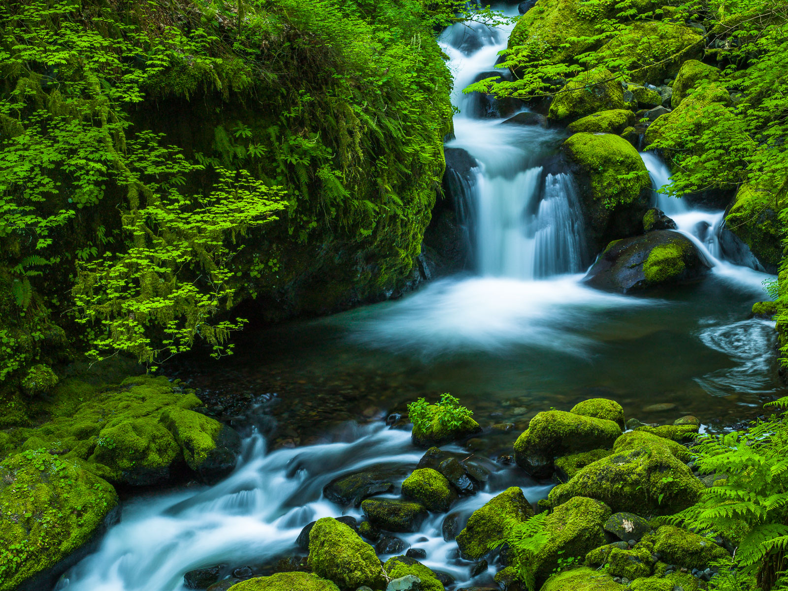 Passing Through,Columbia Gorge, Oregon,Spring,Stream,green,horizontal,lush,Water,Spring, photo