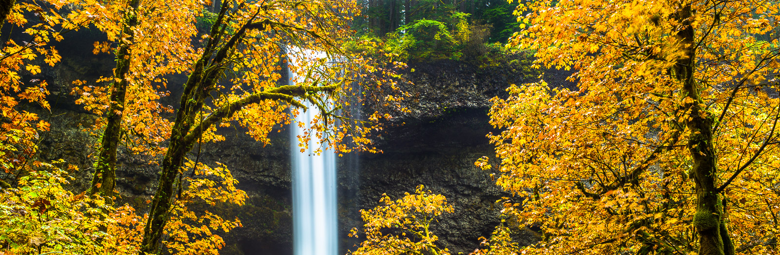 Silver Falls,Silver Falls State Park, Oregon,Water,Shine,Colorful,Autumn,Leaf, photo
