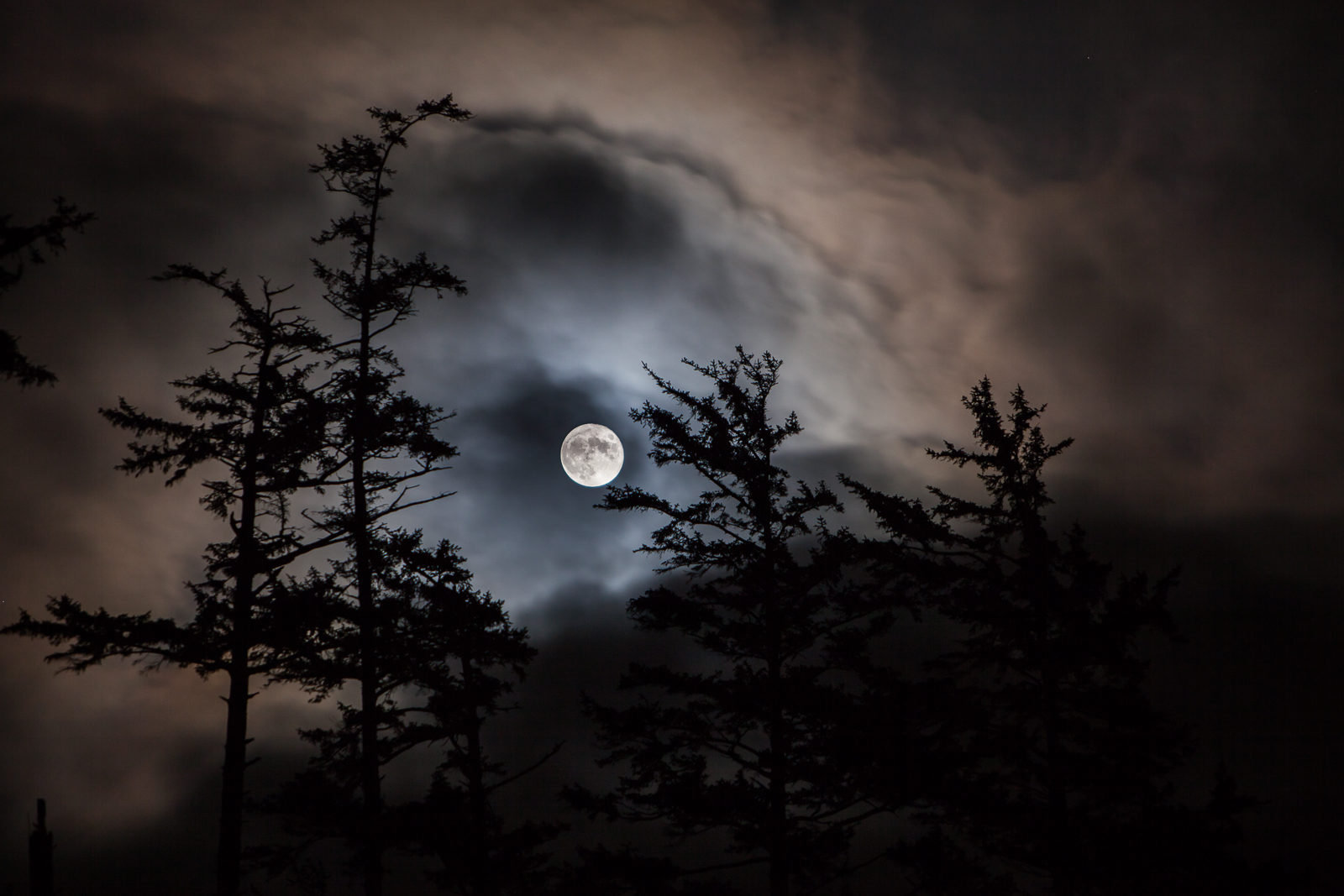 A Wolf's Delight,Ecola State Park, Oregon,Moon,Cloud,Tree,Coast, photo