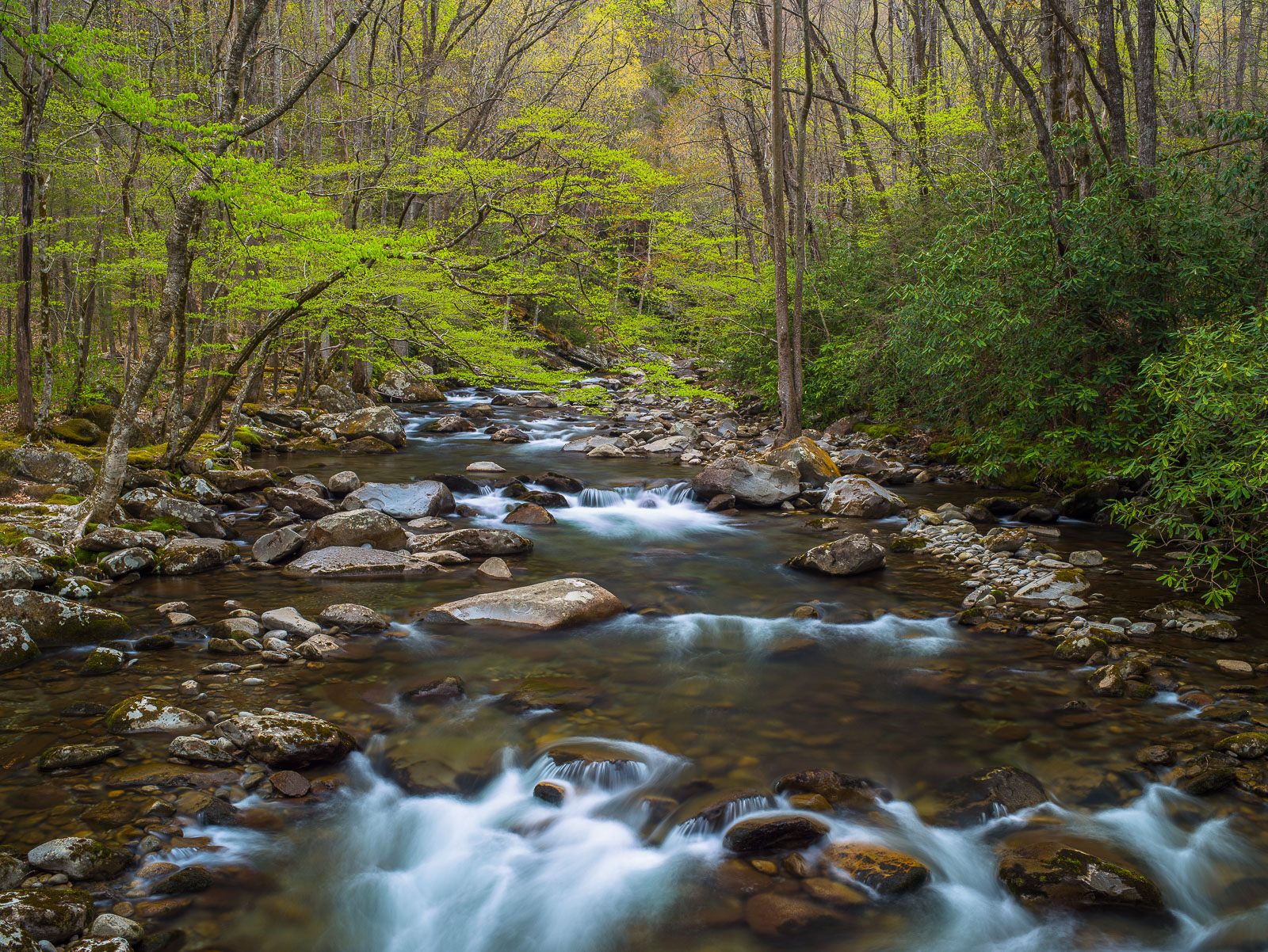 Smokey Mountains National Park, Tennessee, Tennessee's Spring Greens, photo