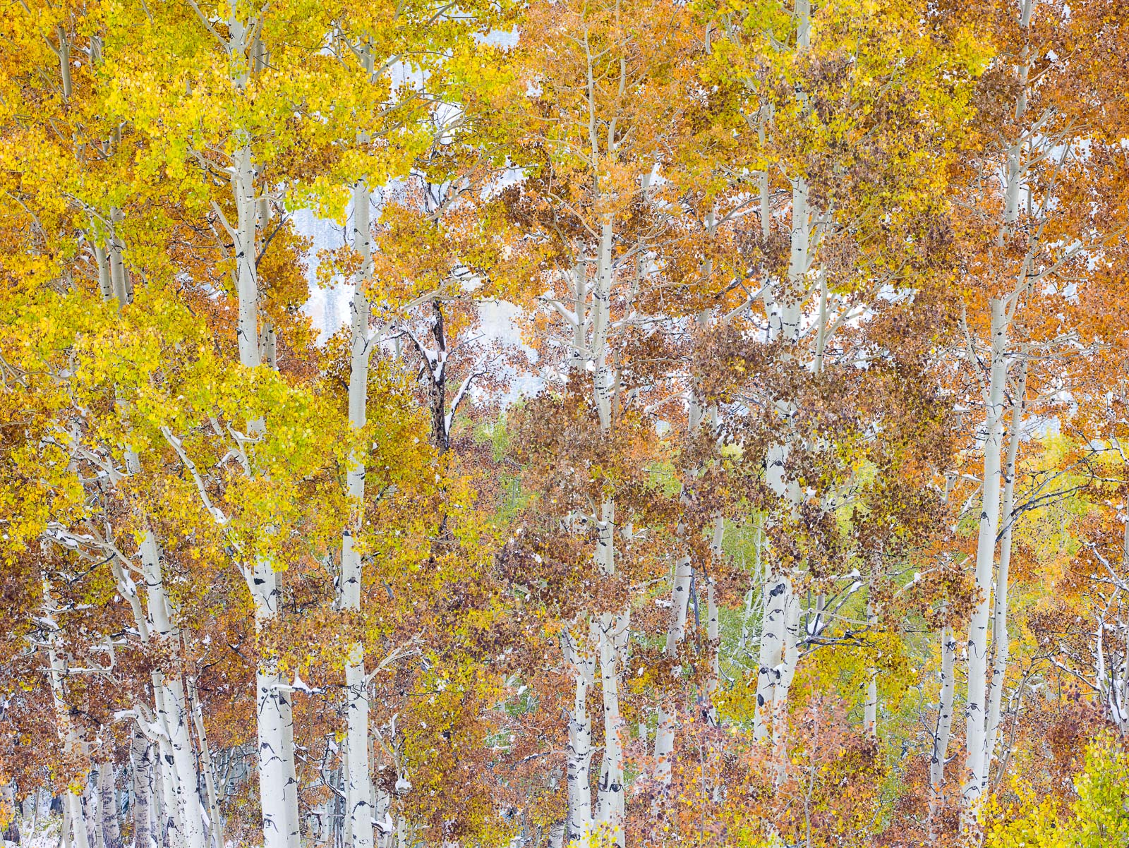 Patchwork,Wasatch National Forest, Utah,snow,winter, photo