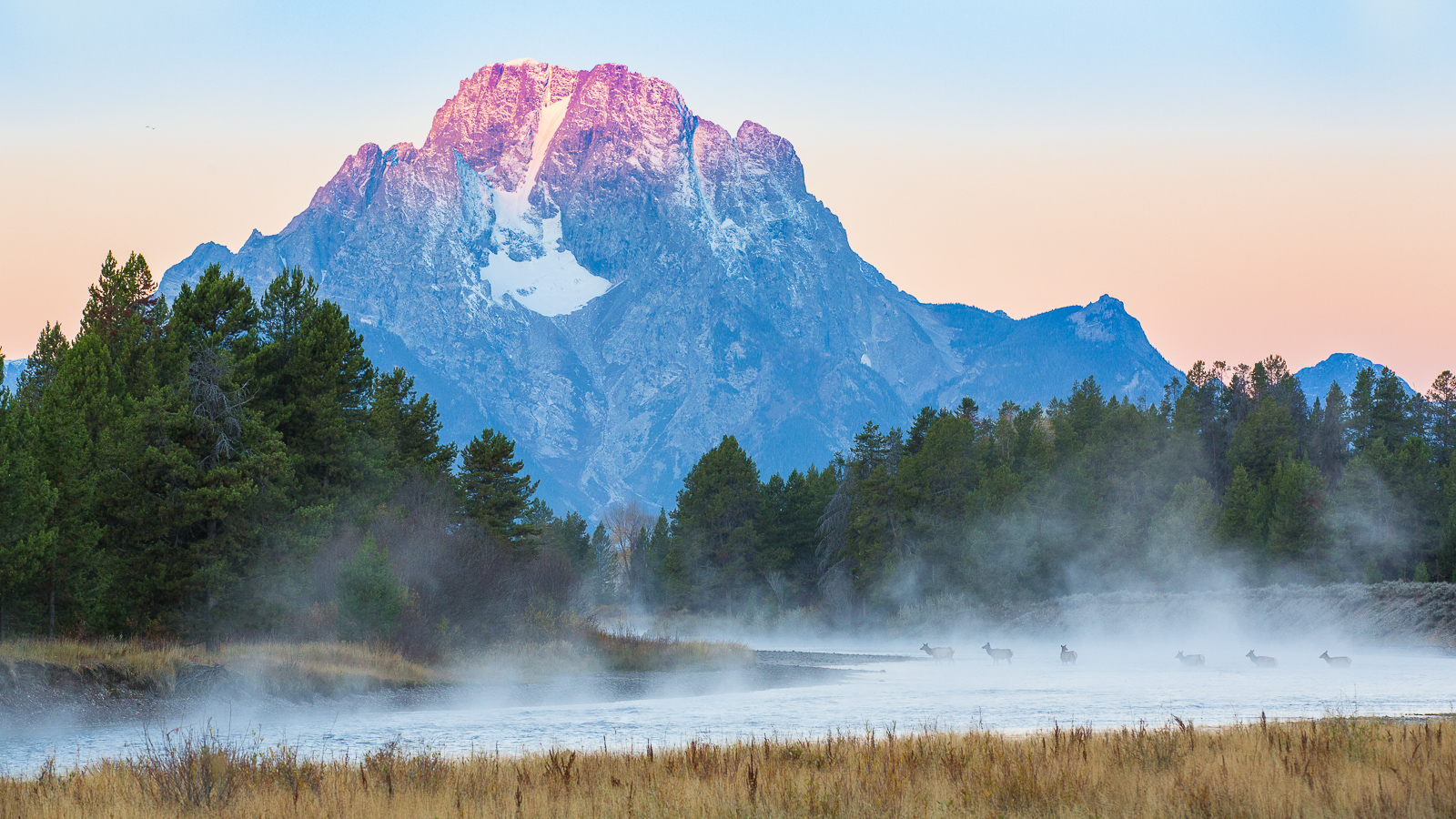 Teton's Native Pilgrims, Grand Teton National Park, Wyoming, elk, photo