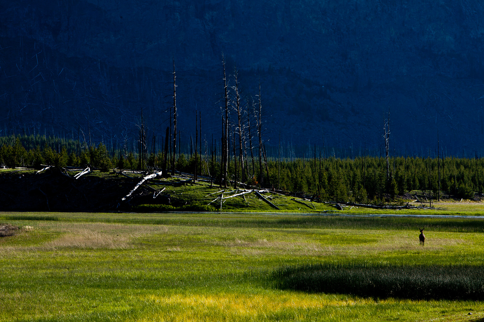 Pinnacle Valley,Elk,Mammal,Spring,Wildlife,Yellowstone National Park, Wyoming,Valley,Pinnacle,River,Spring, photo